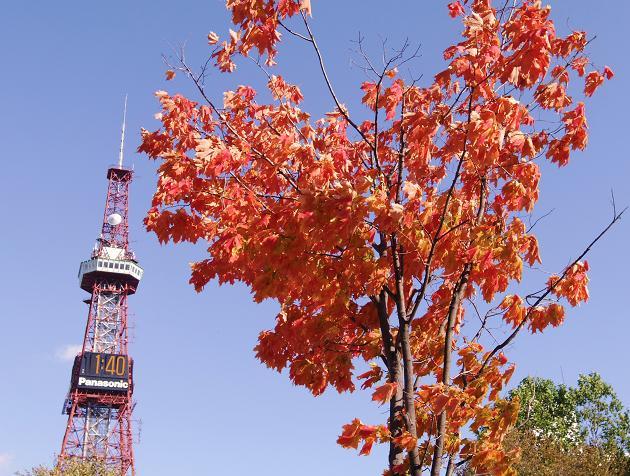 大通公園の秋.jpg