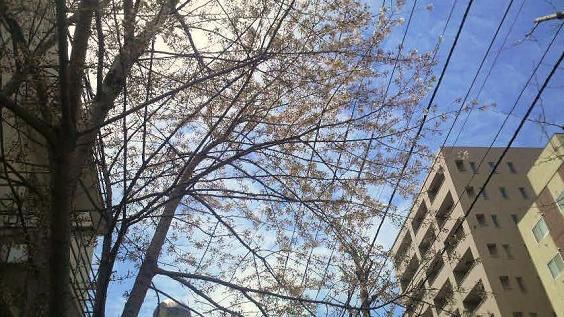 春01.jpg