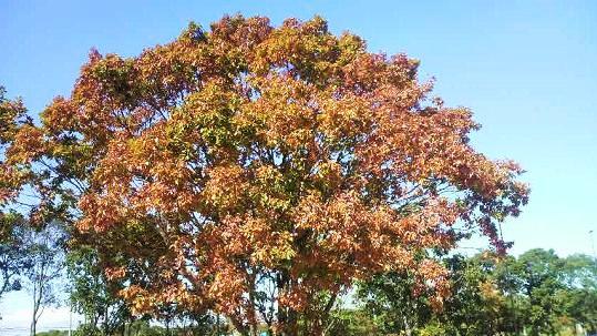 色づく樹.jpg